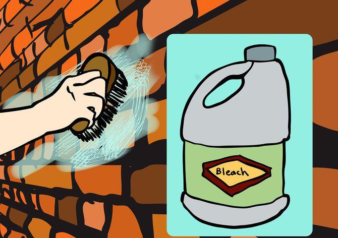 Отмойте со стен плесень с помощью раствора хлорной извести с водой