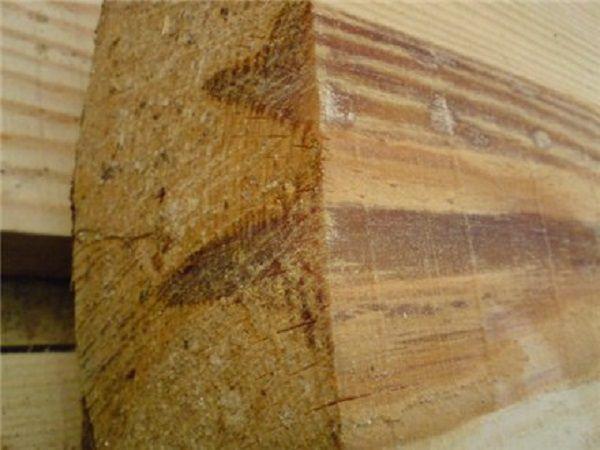 Засмолок древесины