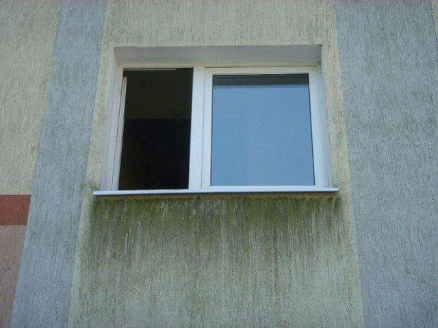 Грибок на фасаде