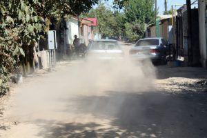 Пыльца растений и пыль